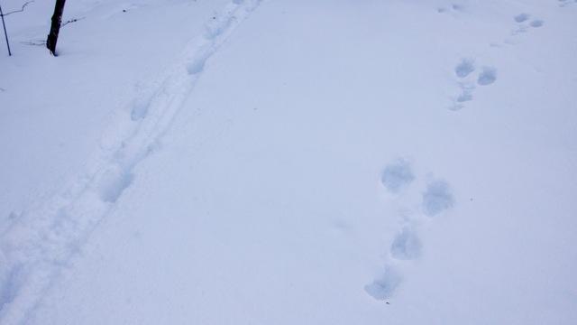 かもしかとウサギの足跡_mini