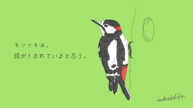 キツツキ_mini